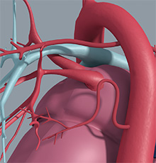 Pulmonary Artery Reconstruction and Right Ventricle Rehabilitation Symposium