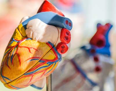 Additional Ventures funds high-impact grants in single ventricle heart defects through MCHRI