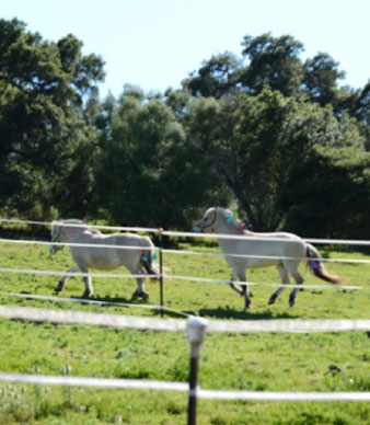 Two horses at the National Center for Equine Facilitated Therapy in Woodside, California
