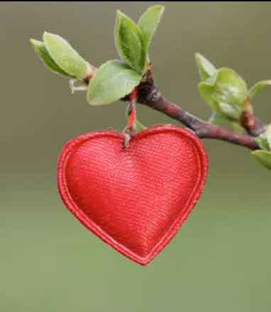 red heart on a branch